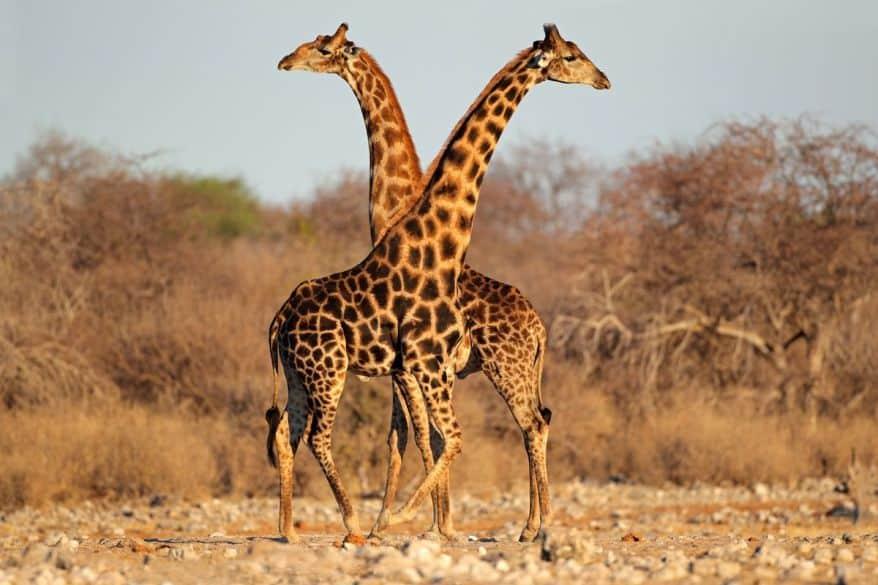 kruger-park-safari-5