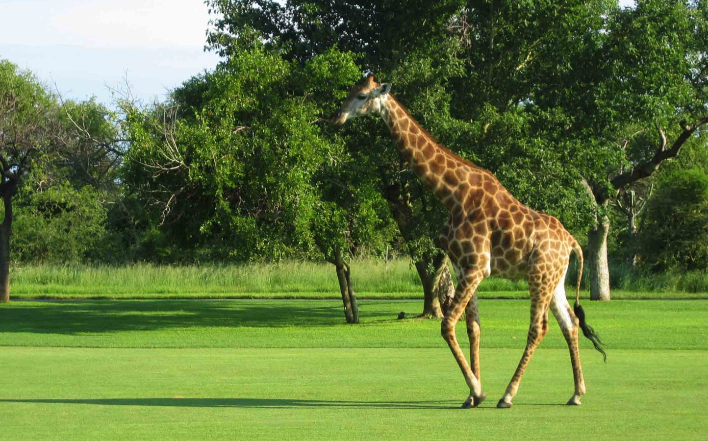 leopard-creek-golf-5