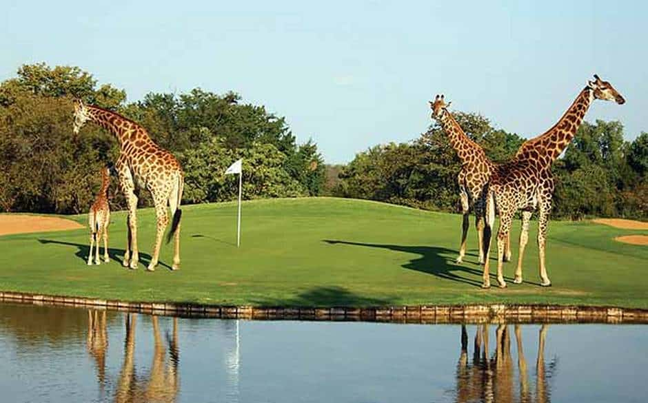 limpopo-golf-0
