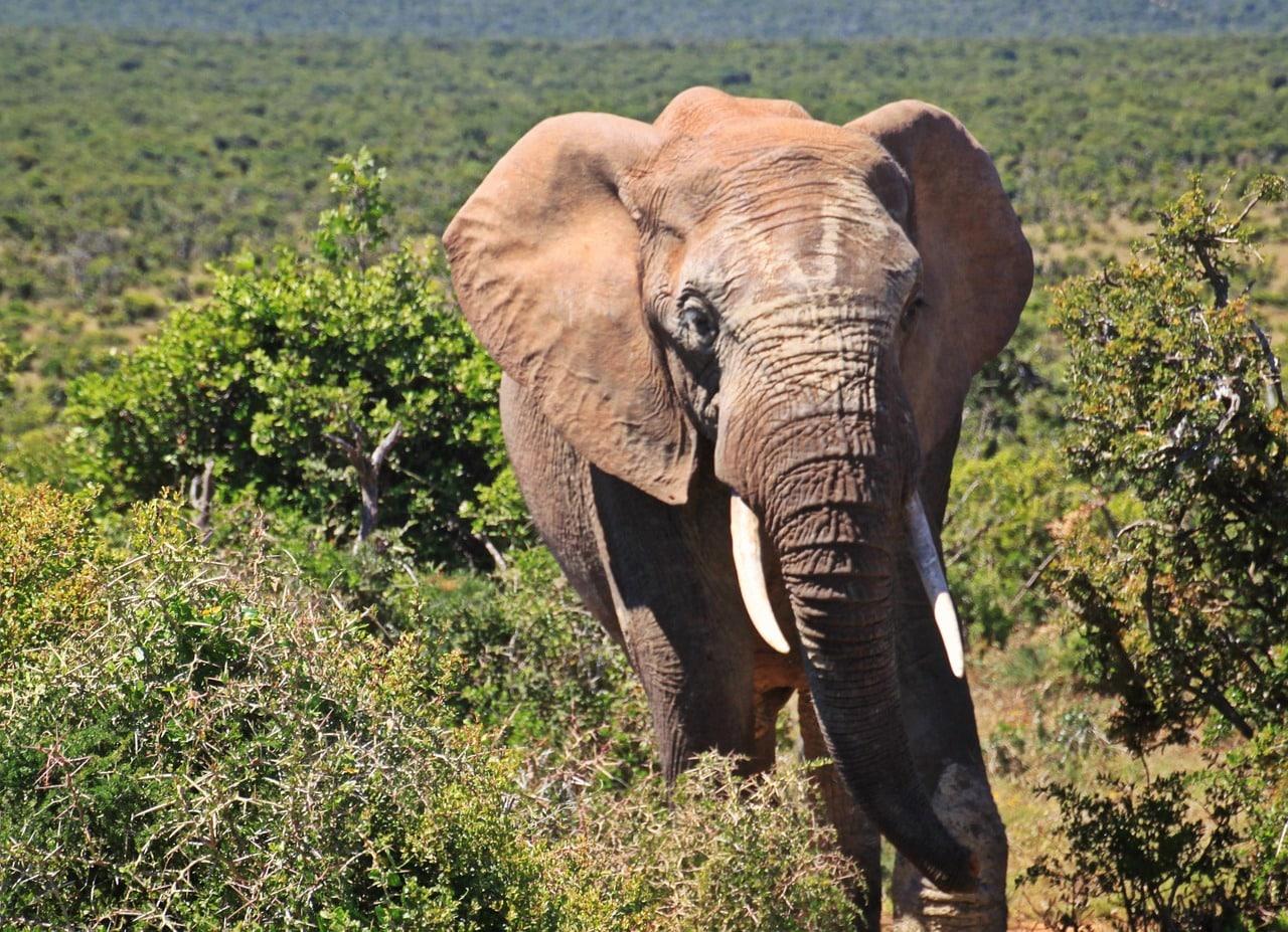 elephant-kruger-park-02